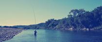 Fishing Sweetfish in Takatsu river, Yasutomi-cho, Masuda, Shimane.