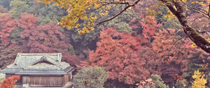 Red leaves of autumn in Hori Garden, Muraki, Tsuwano, Shimane.